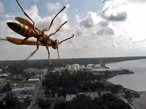 Insect Photobombing Captures