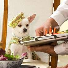 35 Luxuries For Dogs