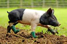 Rain Boots for Pigs - Wellies For Dirt-Fearing Farm Animals