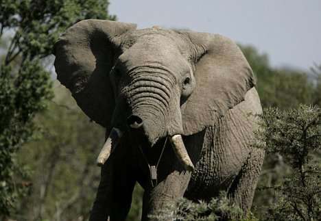 Text Messages From Elephants - High Tech Alerts For Rangers
