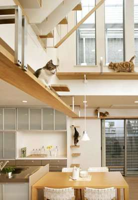 Pet-Friendly Architecture