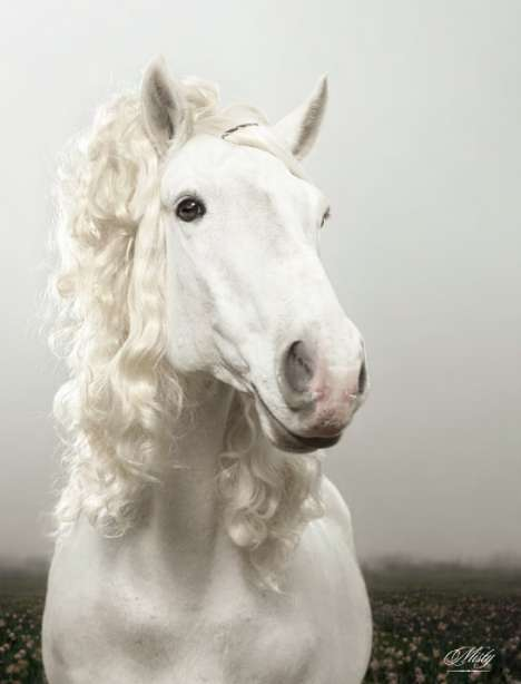 Horses with Hair Extensions