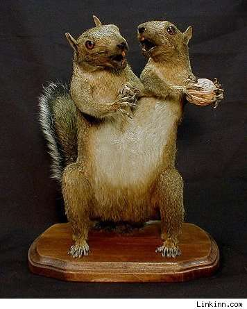 Two-Headed Taxidermy