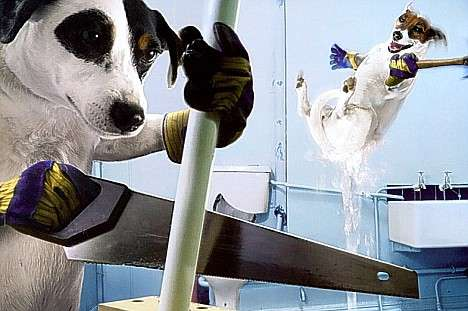 Humanizing Dogs - Canines Doing Chores