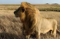 Extensive African Tours - The Ultimate Africa Trip Led by G Adventures Spans Eight Countries