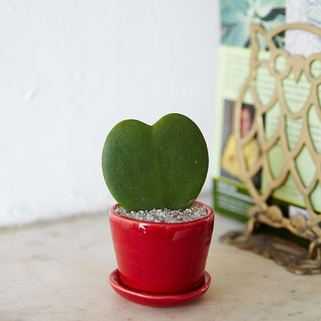 Heart-Shaped Cacti