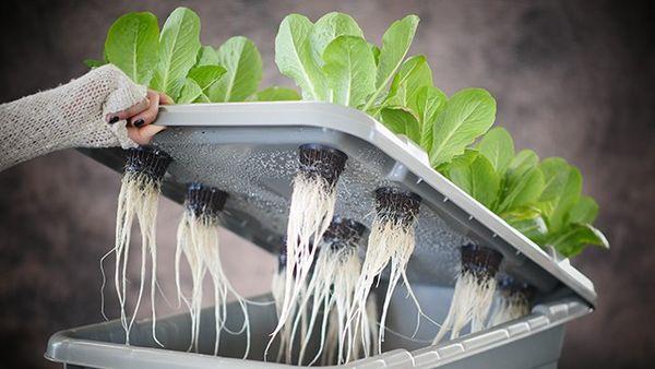 53 Hydroponic Gardening Innovations