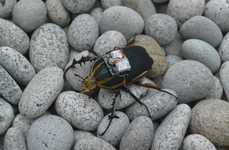 Remote-Controlled Beetles - This Cyborg Beetle's Flight Was Controlled Via Its Electronic Backpack