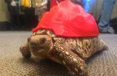 3D-Printed Tortoise Shells - A Bespoke Shell Extends the Life of an Unwell Tortoise
