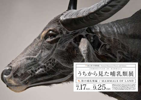 Wildlife X-Ray Photography - Wataru Yoshida Mammal Posters Explore an Animal's Physical Structure