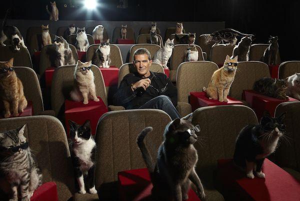 Cat cinema hall