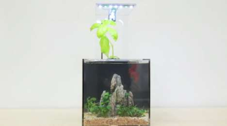 Plant-Cleaned Fish Tanks