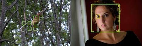 Mirrorless Autofocus Cameras