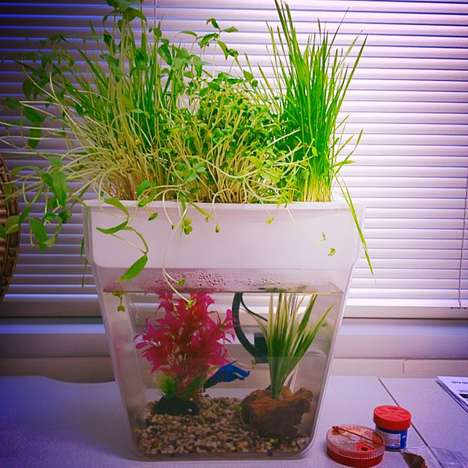 Garden-Growing Fish Tanks