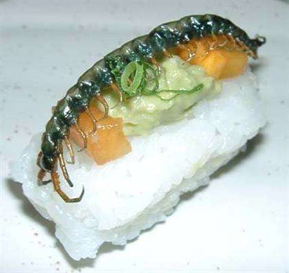 Insect Sushi