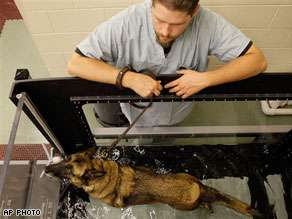 $15M Animal Rehab Centers - Treatment Facilities for Military Working Dogs
