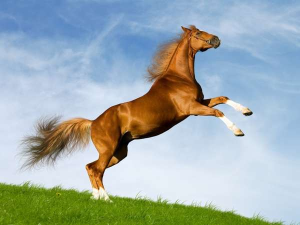 29 Equestrian Innovations in Honor of the Breeders Cup