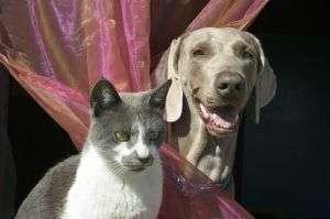 $75 Million Pet Sterilization