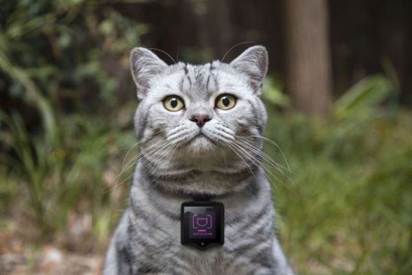 23 Examples of Wearables for Pets