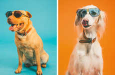 Summery Pooch Portraits - This Summer Photo Collection Features Dogs Wearing Sunglasses