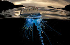 Divided Sea Creature Photography - Over/Under by Matty Smith Captures a Dichotomic Water World