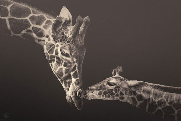 100 Examples of Animal-Themed Photography