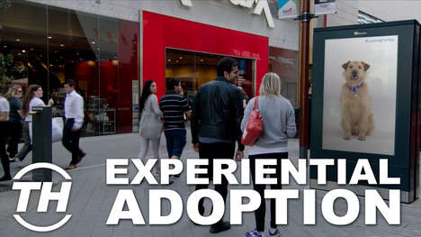 Experiential Adoption - Laura McQuarrie Counts Down Her Top Picks for Pet Adoption Initiatives