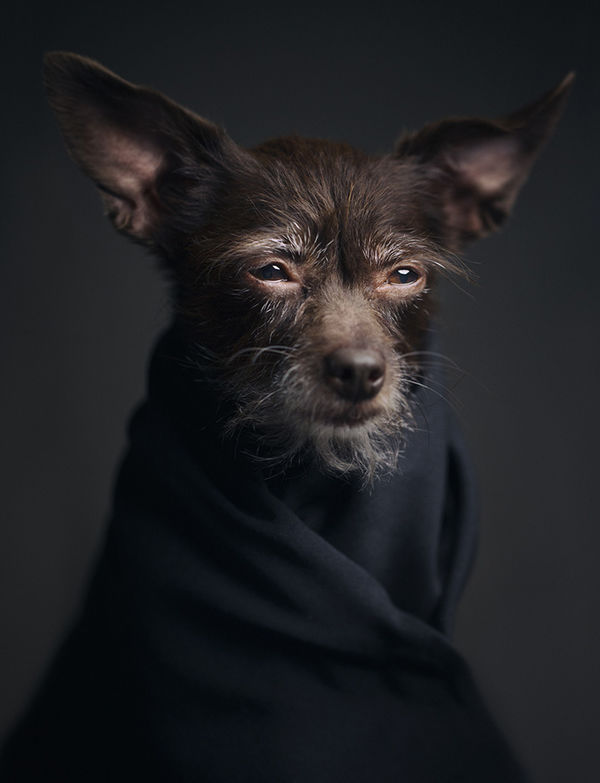 35 Cute Canine Photoshoots