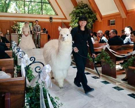 Alpaca Wedding Rentals - This Hotel Allows Couples to Rent an Alpaca for Their Wedding Service
