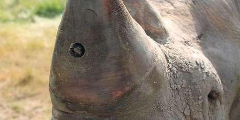 Livestreaming Rhino Implants
