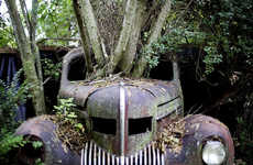Car Graveyard Photography