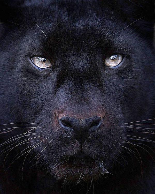 20 Wild Animal Photography Series
