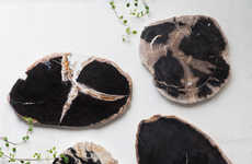 Fossilized Wood Decor
