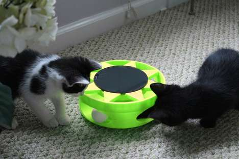 This Simple Interactive Cat Toy Runs on Natural Sunlight