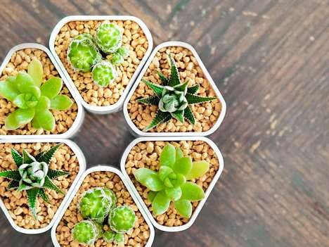 Magnetic Self-Watering Planters - This Magnetic Planter Can Be Placed Anywhere in Your Home