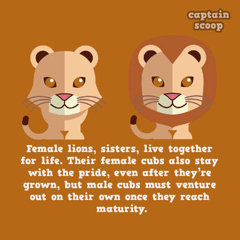 Animal Fact Illustrations