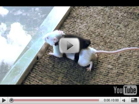 Skydiving Mice