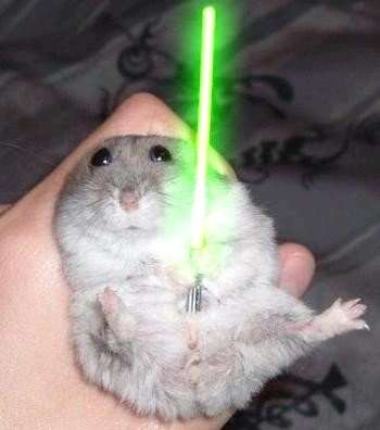 Jedi Pets