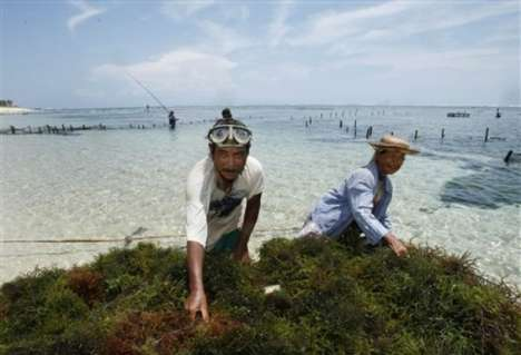 Seaweed Biofuel