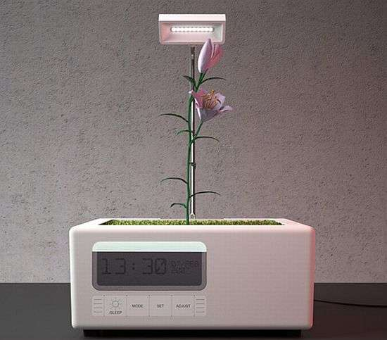 Living Flower Clocks-  The Garden Alarm