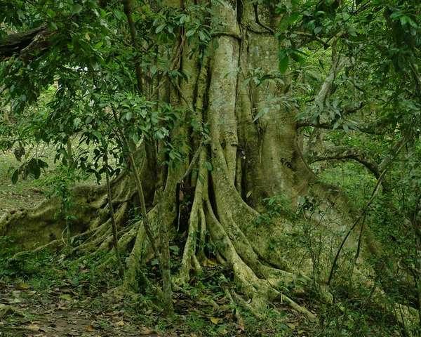 91 Treenovations