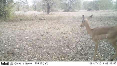 Wildlife-Tracking Platforms