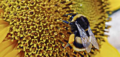 Bee-Delivered Biocontrols