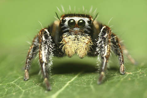 Jumping Spider Robots - This Robotic Spider Jumps Much Like Real Jumping Spiders