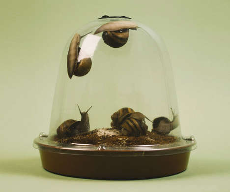 This Aquarium Lets You Grow Pet Snails That You Can Later Eat