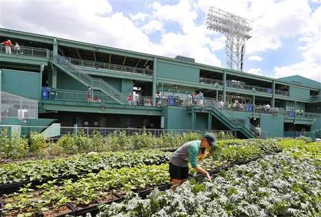 Ballpark Rooftop Gardens - 'Fenway Farms' is Built on the Roof of Boston's Historic Fenway Park