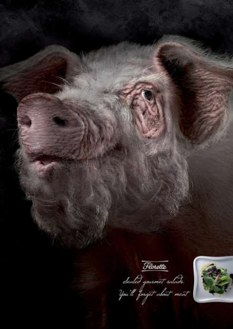 Aged Animals to Sell Salad