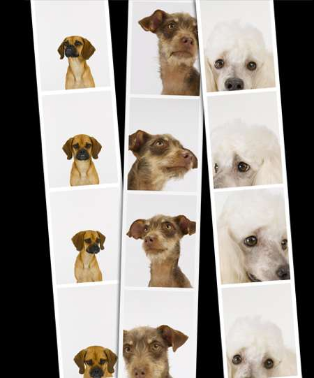 Canine Candids
