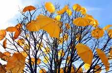 Branded Urban Forestry - The Veuve Clicquot Umbrella Tree