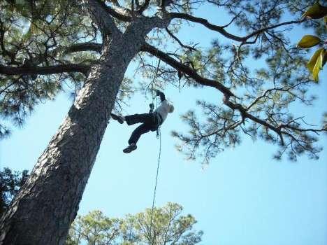 Recreational Tree Climbing